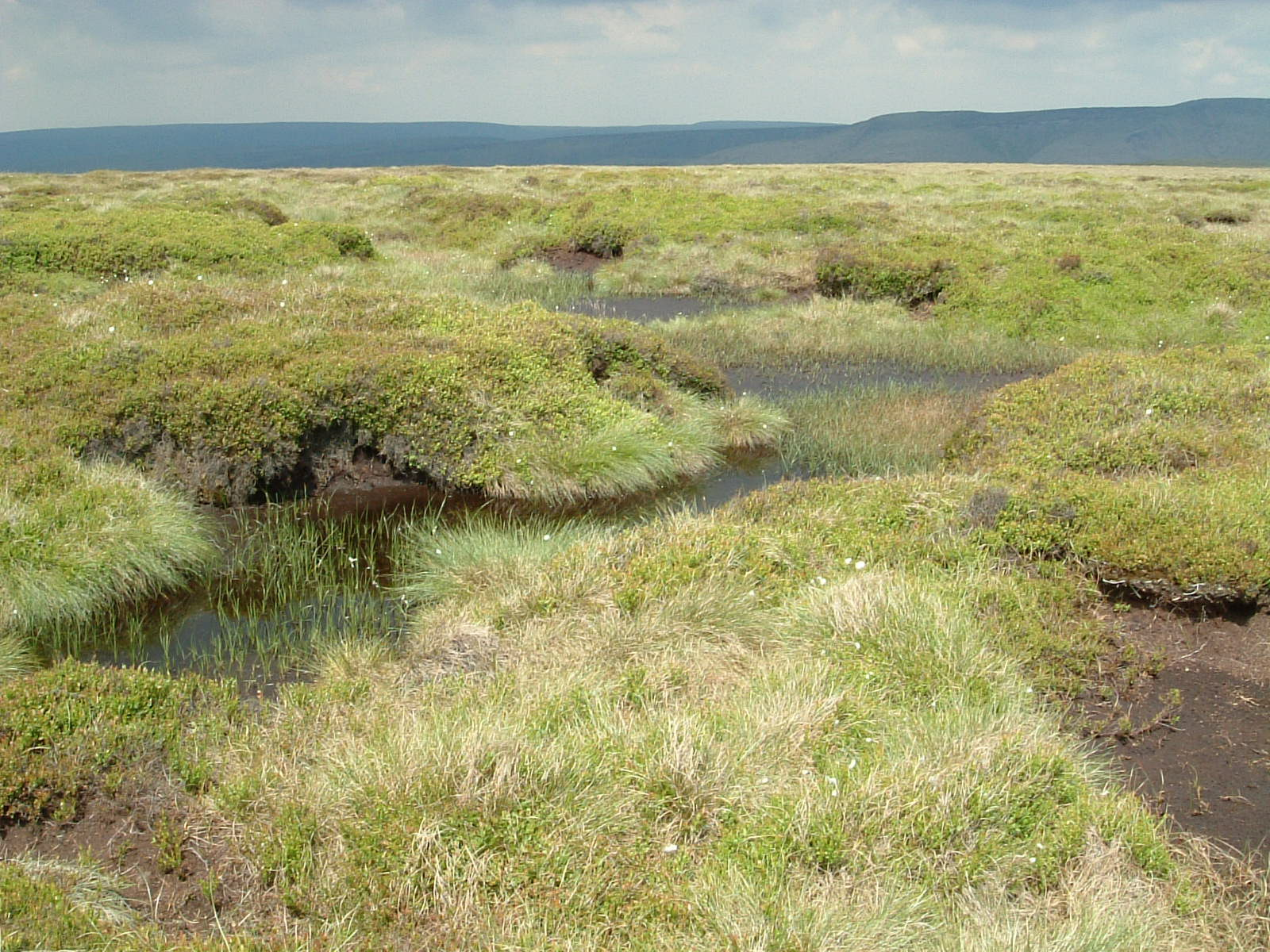 Peat bog after Mill Hill