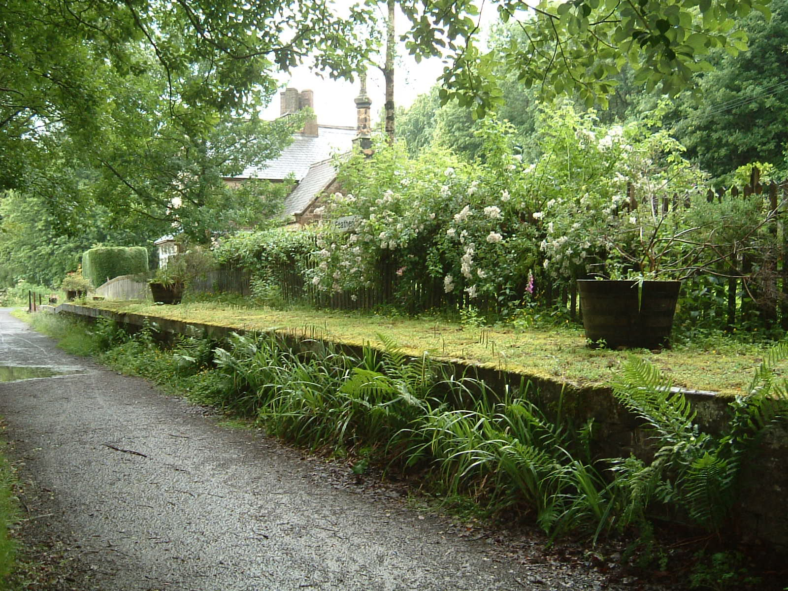 The old and rather overgrown train platform at Featherstone Rowfoot