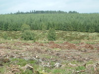 The forests of Kielder