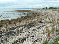 The beach north of Golspie