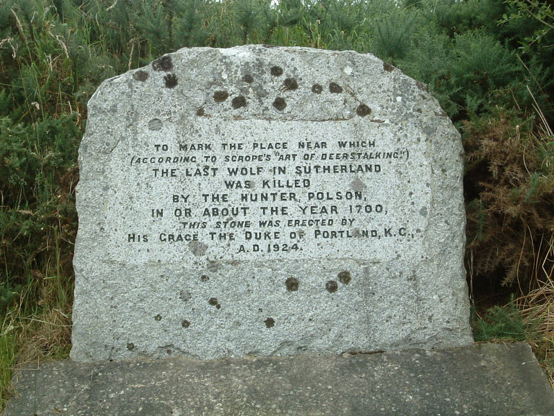 A stone by the A9 marking the spot where the last wolf in Sutherland was killed around the year 1700