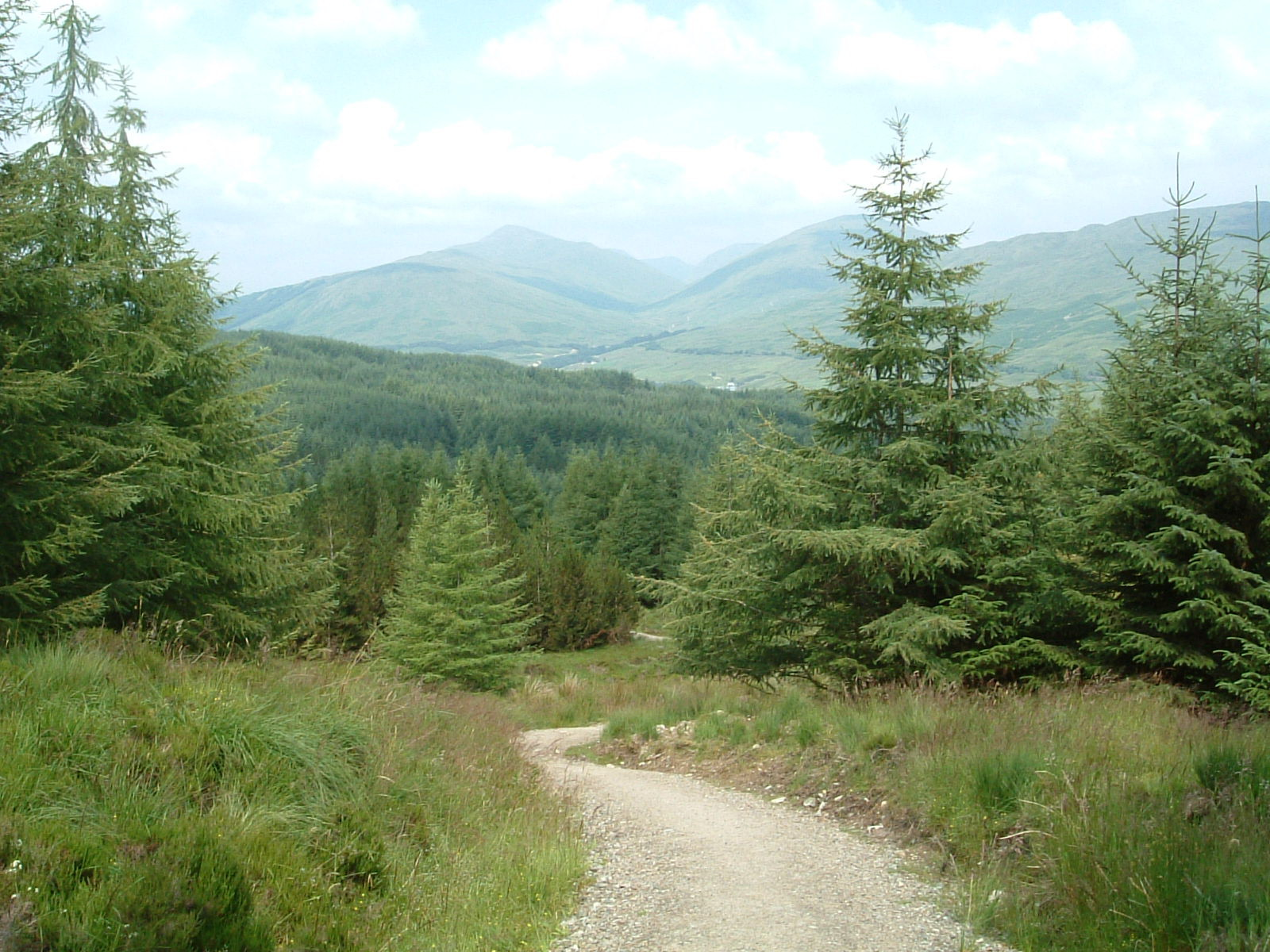 The forest above Crianlarich