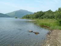The Loch Lomond shoreline