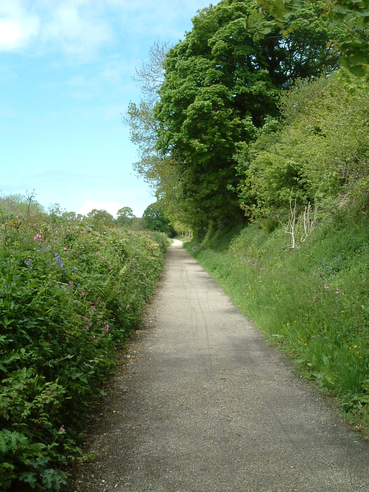 The Camel Trail near Poley's Bridge