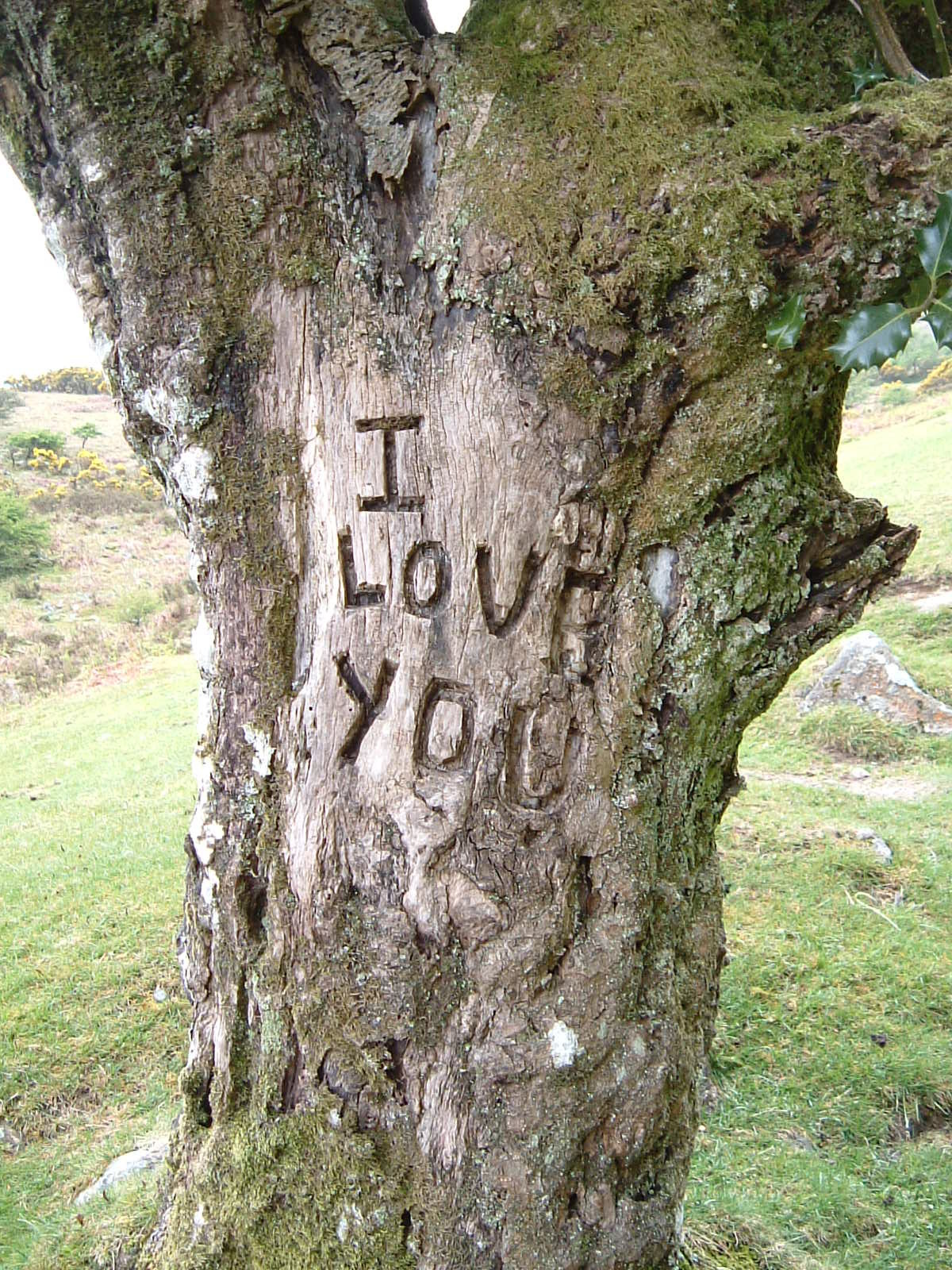 A tree carving saying 'I love you'