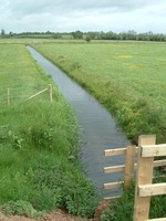 An irrigation channel in the wetlands by the River Tone