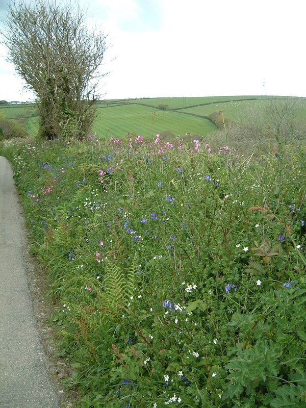 Cornish hedgerow in Treworgan