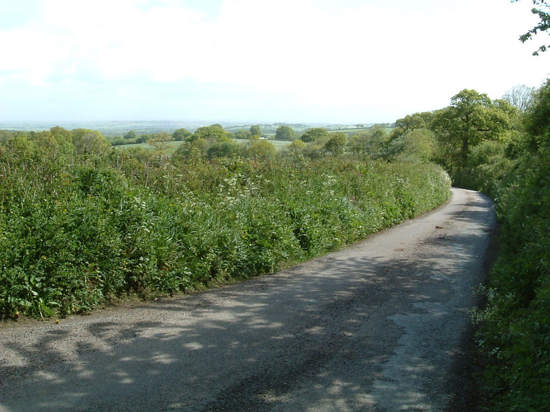 A lane in Devon