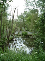 A rather wild nature reserve near Sandhurst