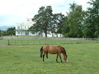 A horse grazing in front of Severn Bank